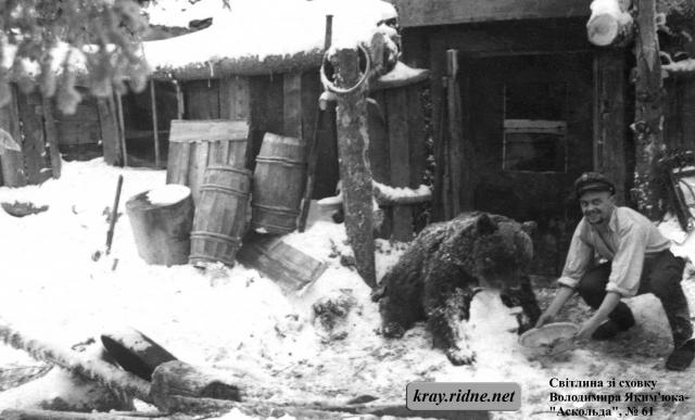 """61. Микола Харук-""""Вихор"""" годує ведмедя."""